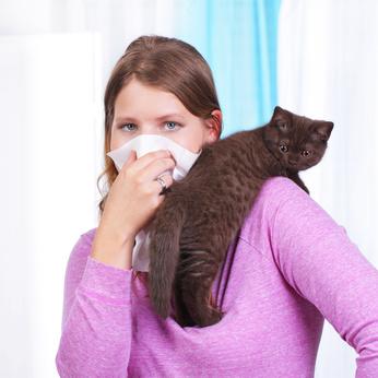 Katzen für Allergiker mit Katzenhaarallergie